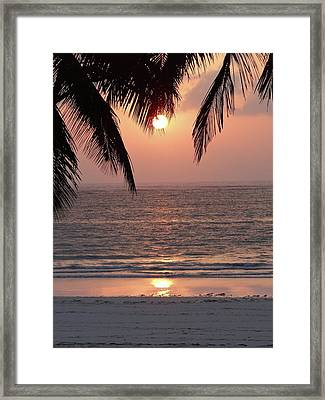 Sunrise Between The Coconut Palms 1 Framed Print