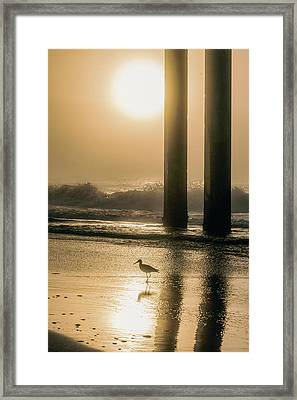 Framed Print featuring the photograph Sunrise Bird At Beach  by John McGraw