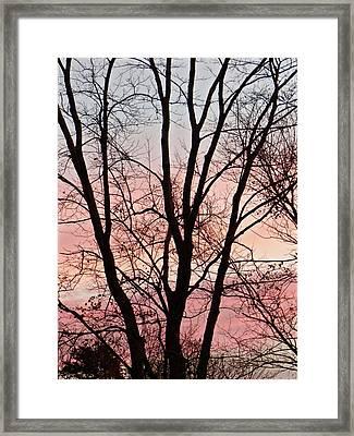 Sunrise Branches Framed Print