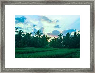 Sunrise Breaking Over Rice Framed Print by Caroline Benson