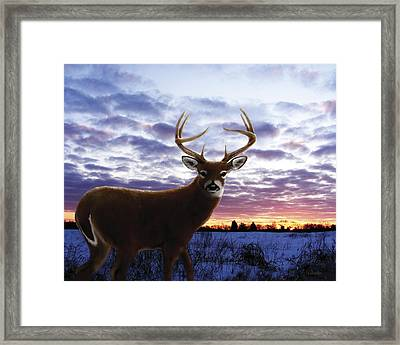 Sunrise Buck Framed Print by Barbara Hymer