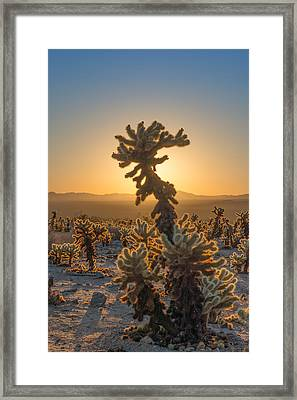 Sunrise Cholla Framed Print by Joseph Smith