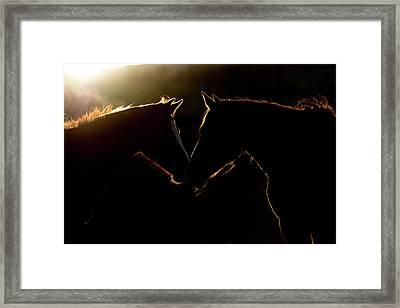 Sunrise Companions Framed Print