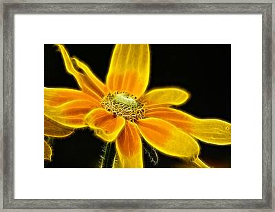 Framed Print featuring the photograph Sunrise Daisy by Cameron Wood