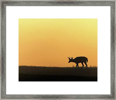 Sunrise Deer Framed Print by Bill Wakeley