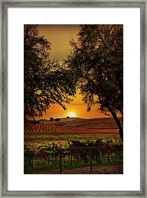 Sunrise Fall Vineyard Framed Print by Stephanie Laird