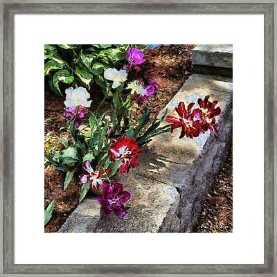 Sunrise Garden Framed Print by RC deWinter