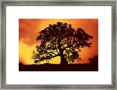 Sunrise Gum Framed Print by Mike  Dawson