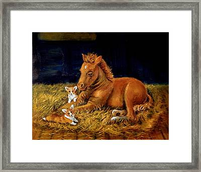 Sunrise In The Barn - Pembroke Welsh Corgi Framed Print