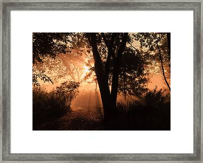 Sunrise In The Marsh 3 Framed Print