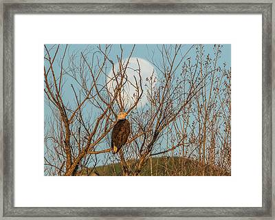 Sunrise Light On Eagle Framed Print by Marc Crumpler