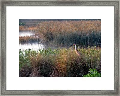 Sunrise On The Wetlands Framed Print