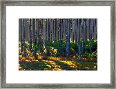 Sunrise On Tree Trunks Framed Print