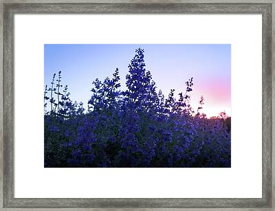 Sunrise Over Beautiful Lavender Field Framed Print by Art Spectrum