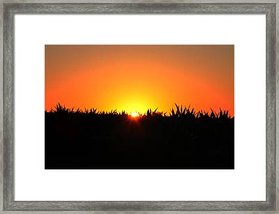 Sunrise Over Corn Field Framed Print by Bill Cannon