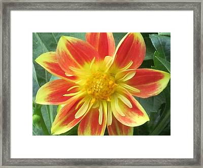 Sunrise Petals Framed Print