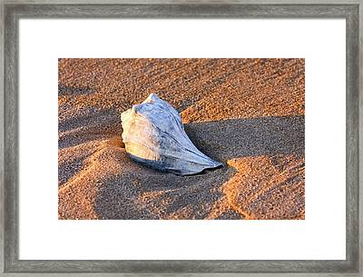 Sunrise Seashell Framed Print