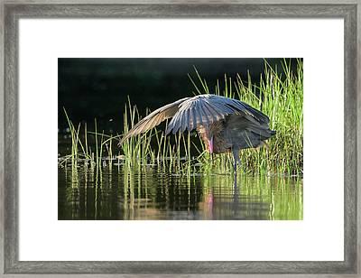 Sunrise Shade Framed Print by Jim Gray