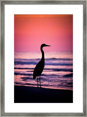 Sunrise Silhouette Framed Print by Shelby Young