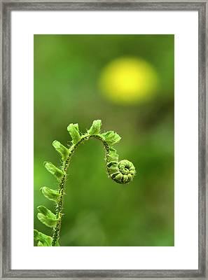 Sunrise Spiral Fern Framed Print by Christina Rollo