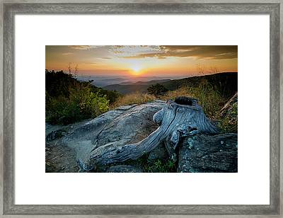 Sunrise Stump Framed Print