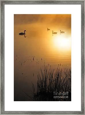 Sunrise Swim Framed Print by Catherine Reusch Daley