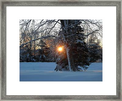 Sunrise Through Branches Framed Print