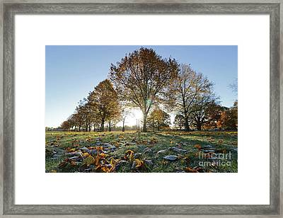 Sunrise Through Lime Trees Framed Print