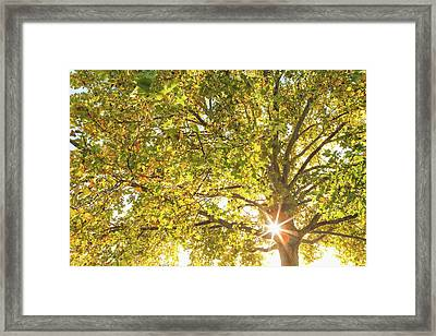 Sunrise Through The Branches Framed Print by Debi Bishop