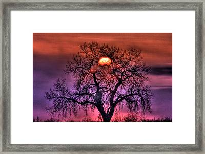 Sunrise Through The Foggy Tree Framed Print