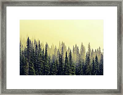 Sunrise Through The Pines Framed Print