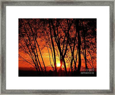 Sunrise Through The Trees Framed Print by  Graham Taylor