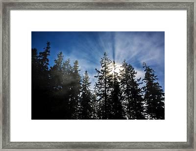 Sunrise Through Trees Framed Print