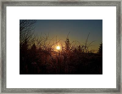 Sunrise Thru The Brush Framed Print