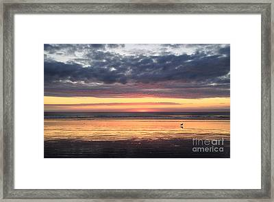 Sunrise With Gull Framed Print by Janice Reed Messier