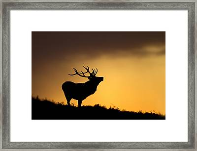 Sunrise With Red Deer Framed Print by Andy Luberti