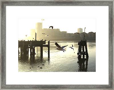 Sunrise With Seagulls Framed Print