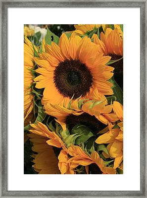 Suns And Brothers Framed Print by Alan Rutherford