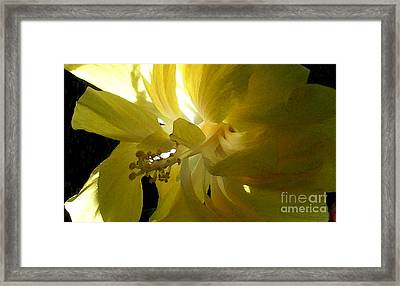 Suns Glare Framed Print by James Temple