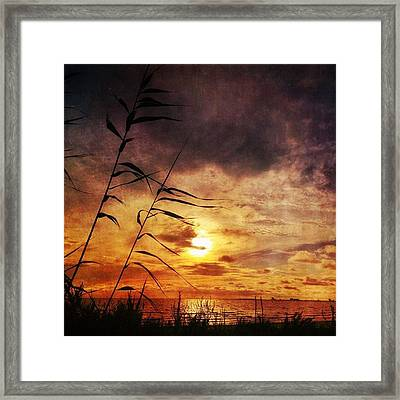 Sunset Among The Reeds #sunset Framed Print