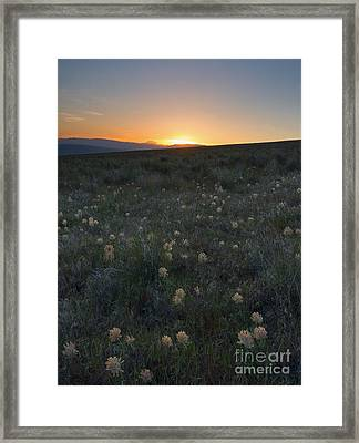 Sunset And Clover Framed Print