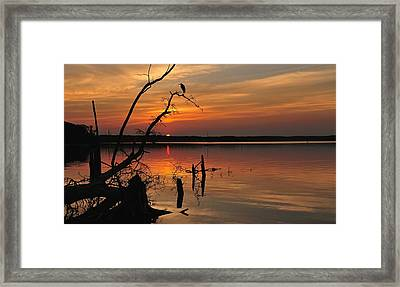 Framed Print featuring the photograph Sunset And Heron by Angel Cher