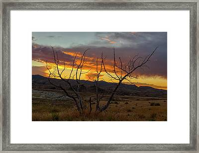 Sunset And Petrified Tree Framed Print by David Gn