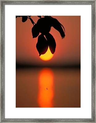Sunset And Spider Framed Print by Thomas Firak