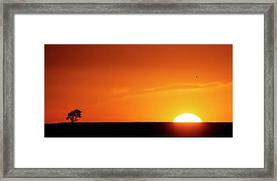 Sunset And Tree -01 Framed Print