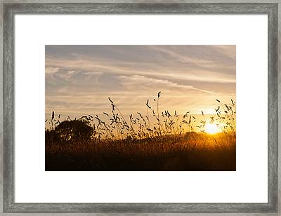 Sunset And Wheat Field Framed Print