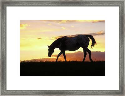 Sunset Appy Framed Print