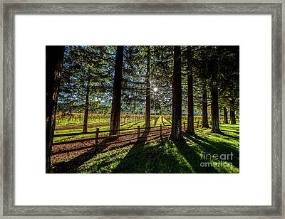 Sunset At Far Niente Framed Print