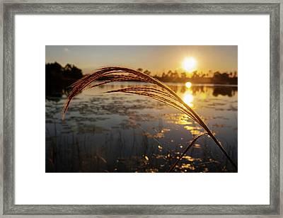 Sunset At Gator Hole 2 Framed Print