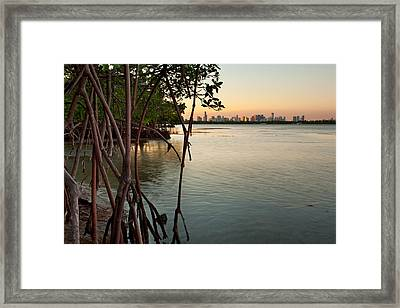 Sunset At Miami Behind Wild Mangrove Forest Framed Print by Matt Tilghman